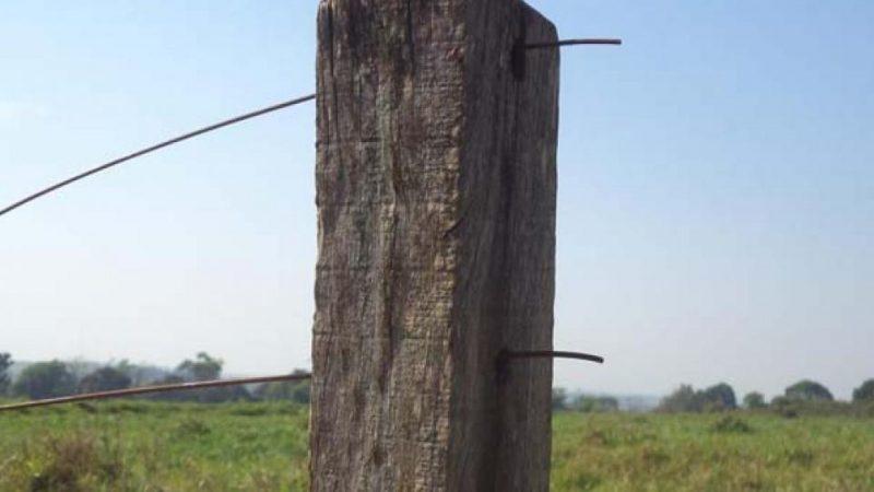 Gado é furtado em propriedade rural de Guzolândia