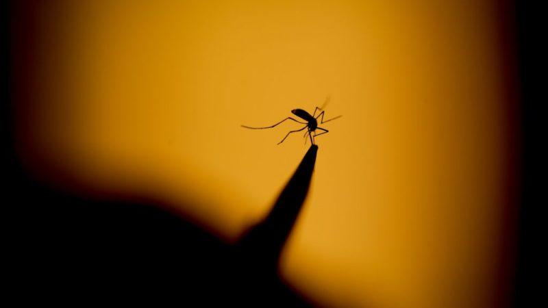 General Salgado anuncia mutirão de combate a dengue