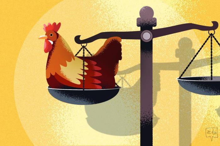 Crônica: O furto das galinhas