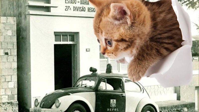 Crônica: A culpa era do gato