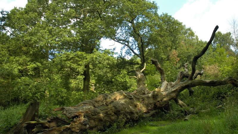 Crônica: A árvore caída