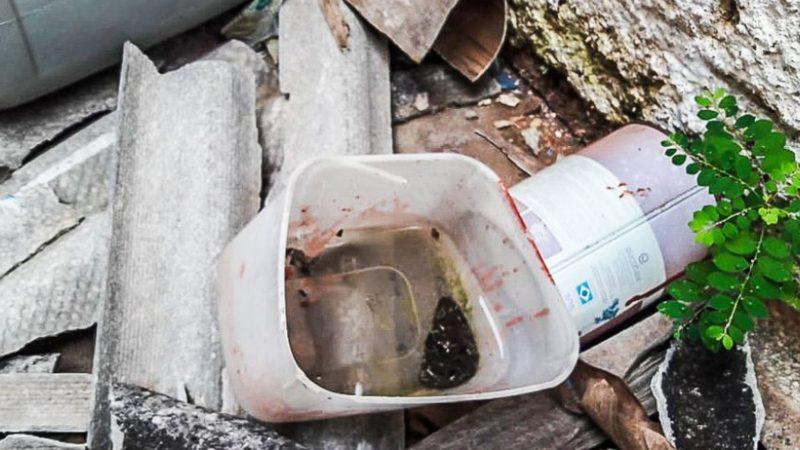 Prefeitura anuncia arrastão de limpeza contra a dengue