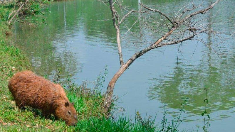 Aracanguá desenvolve programa para recuperar nascentes de rios